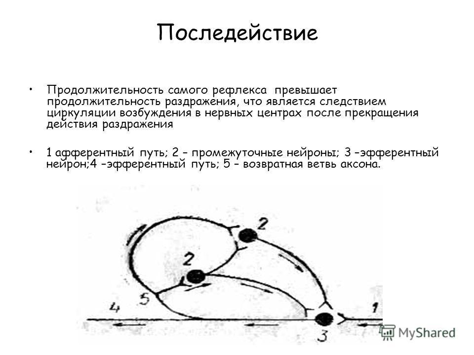 Последействие Продолжительность самого рефлекса превышает продолжительность раздражения, что является следствием циркуляции возбуждения в нервных центрах после прекращения действия раздражения 1 афферентный путь; 2 – промежуточные нейроны; 3 –эфферен