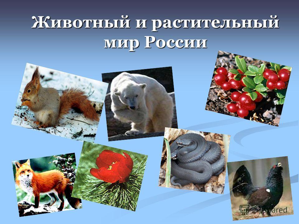 Доклад на тему растительный и животный мир россии 5559