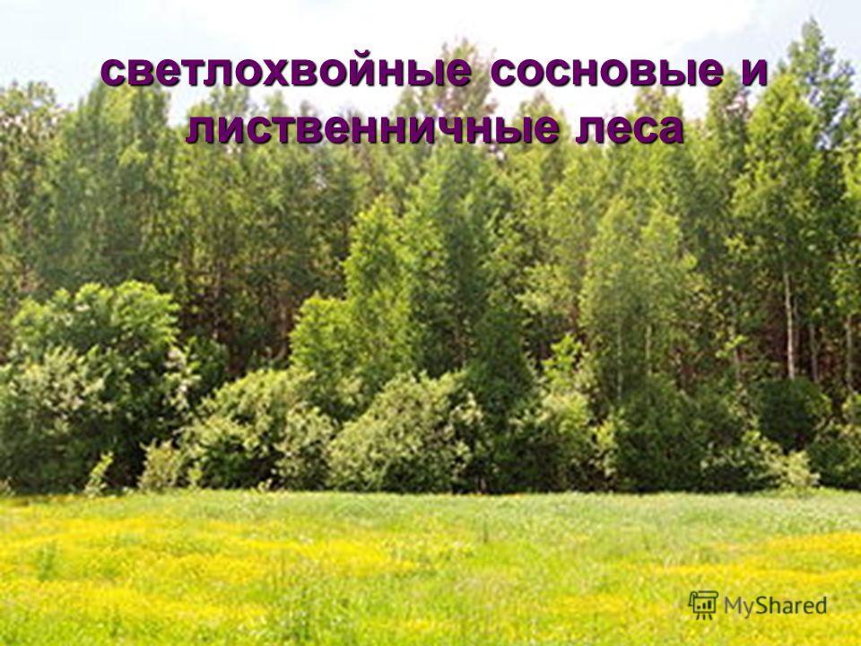 светлохвойные сосновые и лиственничные леса