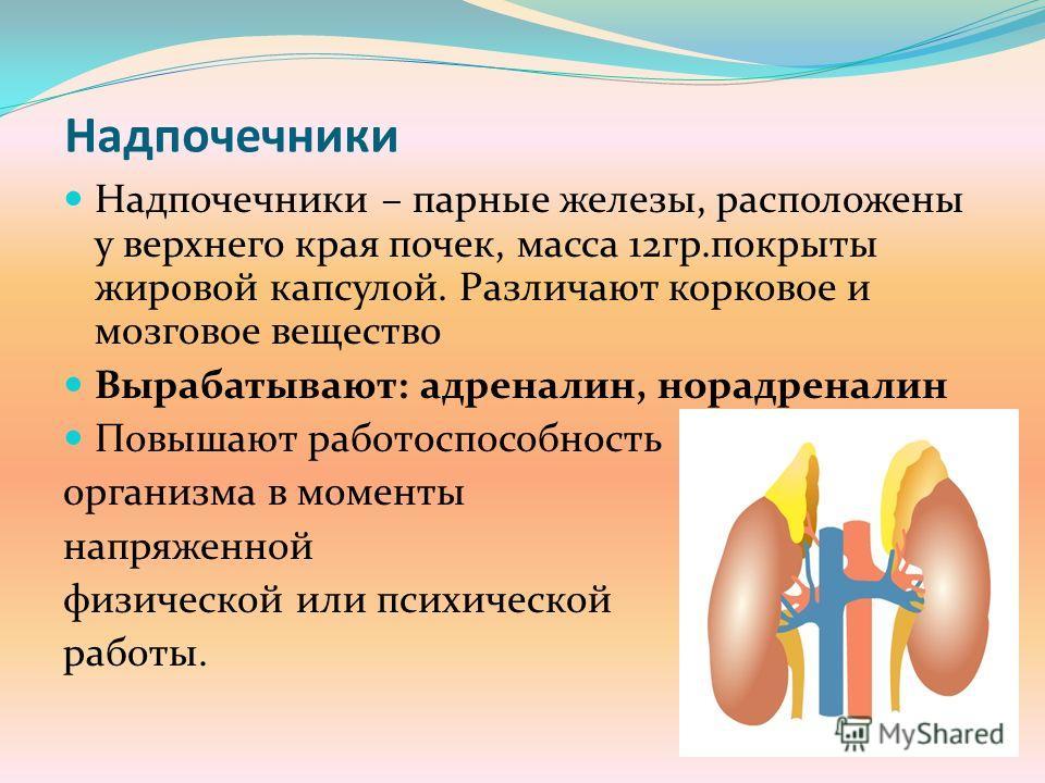 Надпочечники Надпочечники – парные железы, расположены у верхнего края почек, масса 12гр.покрыты жировой капсулой. Различают корковое и мозговое вещество Вырабатывают: адреналин, норадреналин Повышают работоспособность организма в моменты напряженной