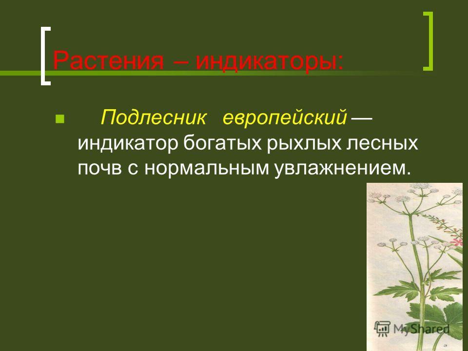 Растения – индикаторы: Подлесник европейский индикатор богатых рыхлых лесных почв с нормальным увлажнением.