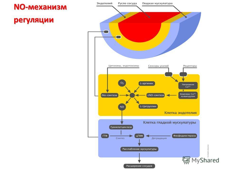 NО-механизм регуляции
