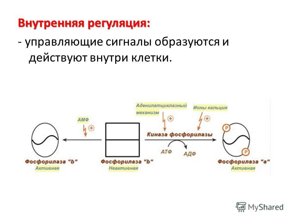 Внутренняя регуляция: - управляющие сигналы образуются и действуют внутри клетки.