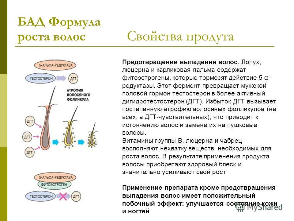Предотвращение выпадения волос. Лопух, люцерна и карликовая пальма содержат фитоэстрогены, которые тормозят действие 5 α- редуктазы. Этот фермент превращает мужской половой гормон тестостерон в более активный дигидротестостерон (ДГТ). Избыток ДГТ выз