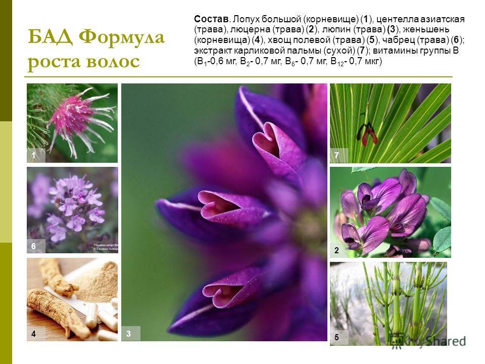 БАД Формула роста волос Состав. Лопух большой (корневище) (1), центелла азиатская (трава), люцерна (трава) (2), люпин (трава) (3), женьшень (корневища) (4), хвощ полевой (трава) (5), чабрец (трава) (6); экстракт карликовой пальмы (сухой) (7); витамин