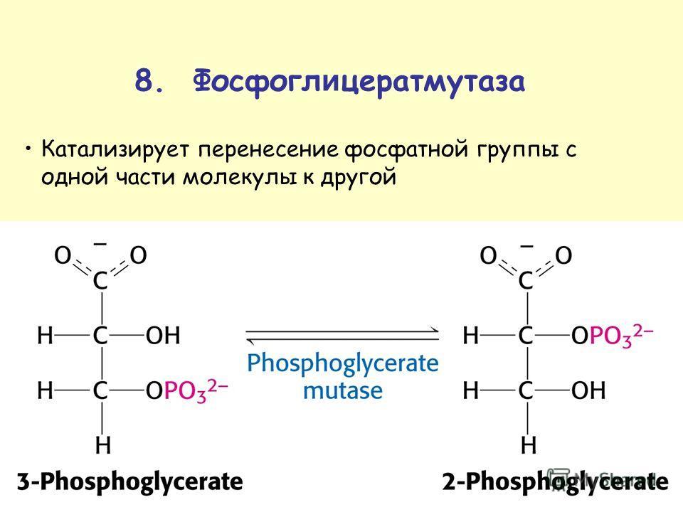 8. Фосфогл и цератмутаза Катализирует перенесение фосфатной группы с одной части молекулы к другой