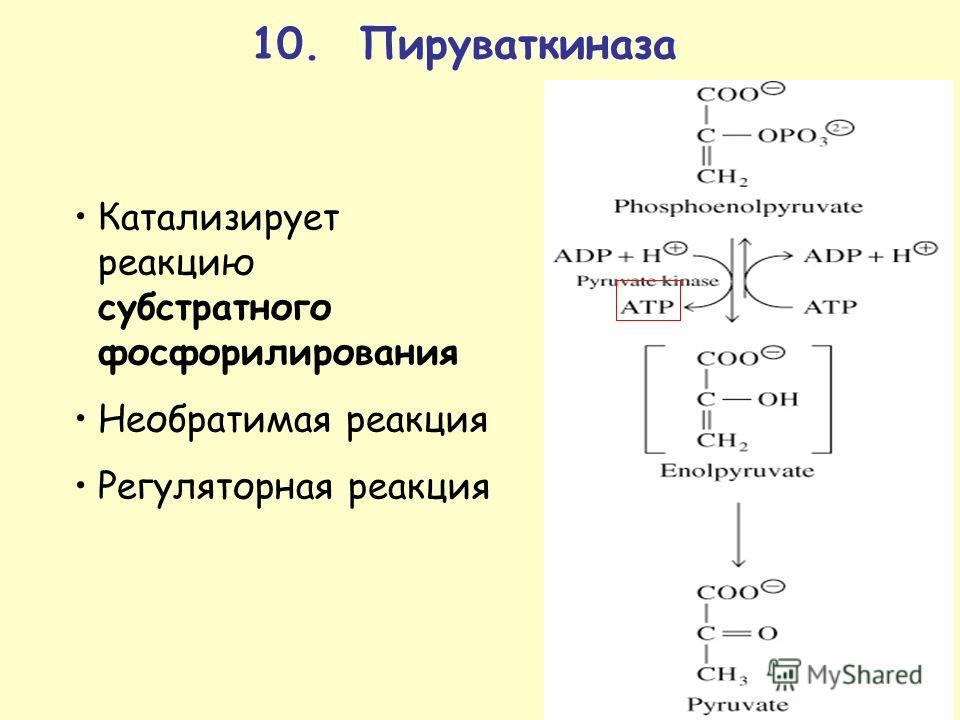 10. Пируваткиназа Катализирует реакцию субстратного фосфорилирования Необратимая реакция Регуляторная реакция