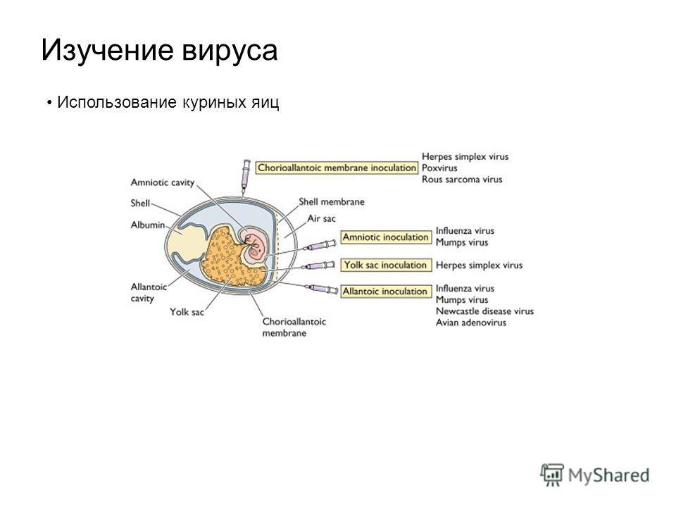 Изучение вируса Использование куриных яиц