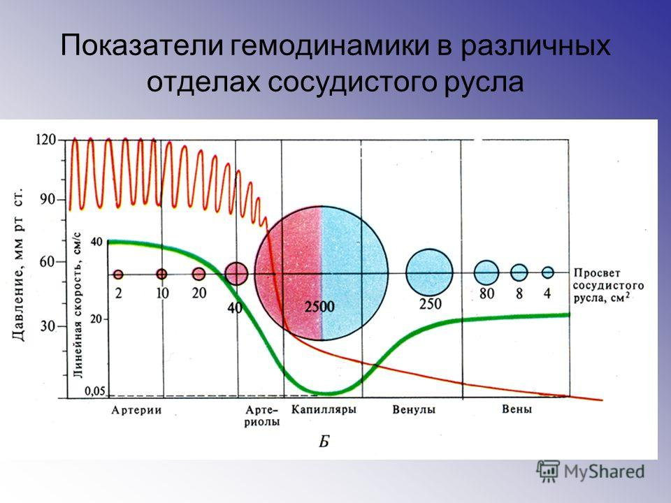 Показатели гемодинамики в различных отделах сосудистого русла