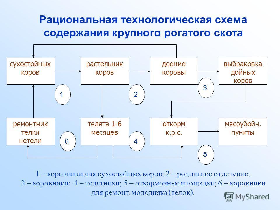 Схема технологии производства продукции