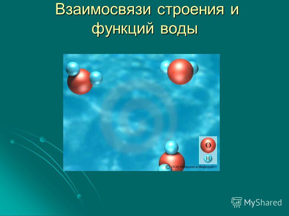 Взаимосвязи строения и функций воды Взаимосвязи строения и функций воды