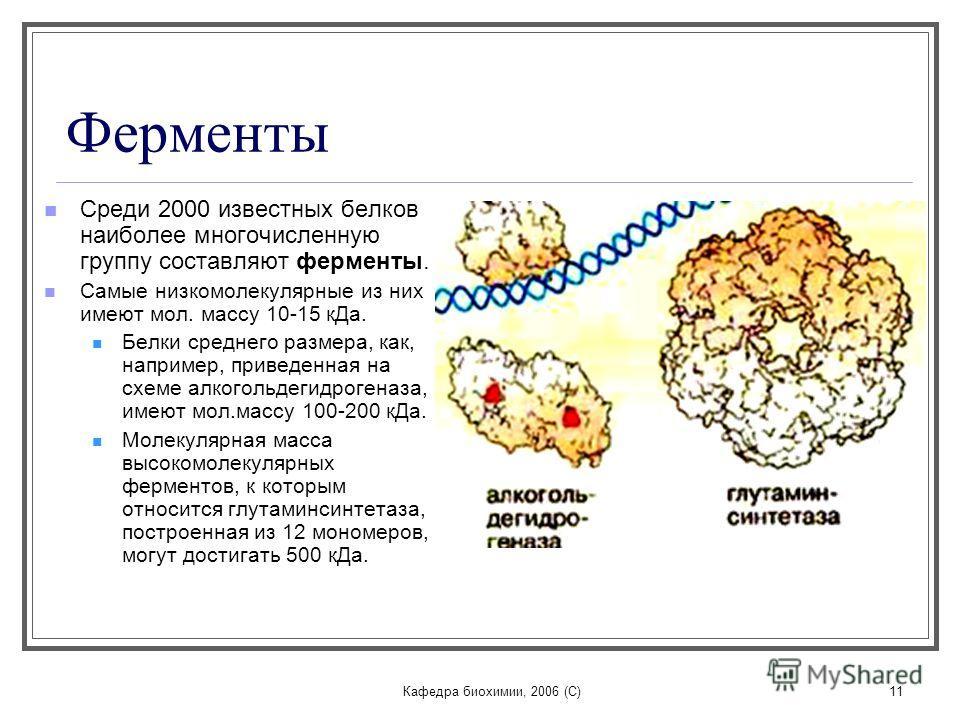 Кафедра биохимии, 2006 (C)11 Ферменты Среди 2000 известных белков наиболее многочисленную группу составляют ферменты. Самые низкомолекулярные из них имеют мол. массу 10-15 кДа. Белки среднего размера, как, например, приведенная на схеме алкогольдегид