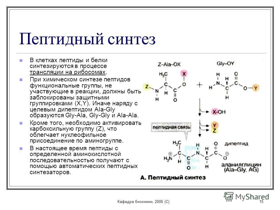 Пептиды биохимия как правильно выходить с курса сустанона