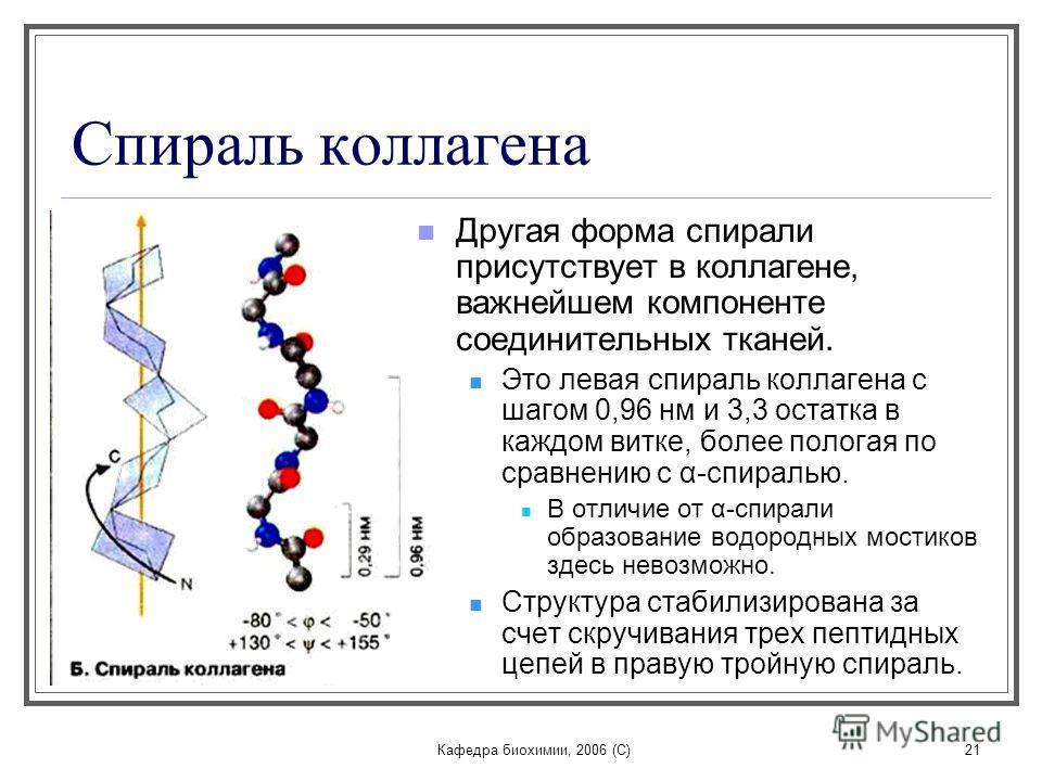 Кафедра биохимии, 2006 (C)21 Спираль коллагена Другая форма спирали присутствует в коллагене, важнейшем компоненте соединительных тканей. Это левая спираль коллагена с шагом 0,96 нм и 3,3 остатка в каждом витке, более пологая по сравнению с α-спираль