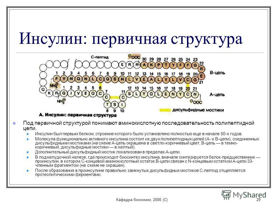 Кафедра биохимии, 2006 (C)29 Инсулин: первичная структура Под первичной структурой понимают аминокислотную последовательность полипептидной цепи. Инсулин был первым белком, строение которого было установлено полностью еще в начале 50-х годов. Молекул