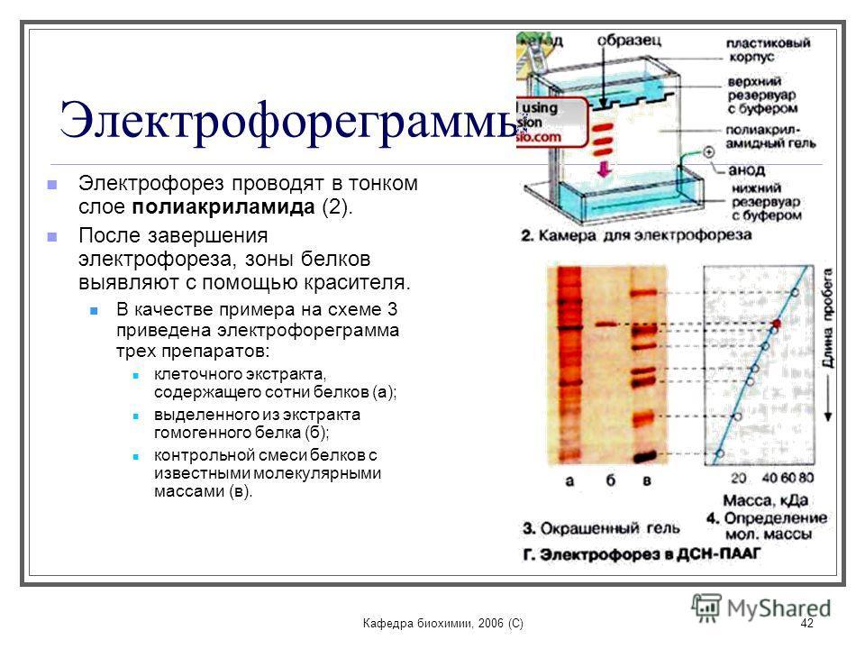 Кафедра биохимии, 2006 (C)42 Электрофореграммы Электрофорез проводят в тонком слое полиакриламида (2). После завершения электрофореза, зоны белков выявляют c помощью красителя. В качестве примера на схеме 3 приведена электрофореграмма трех препаратов