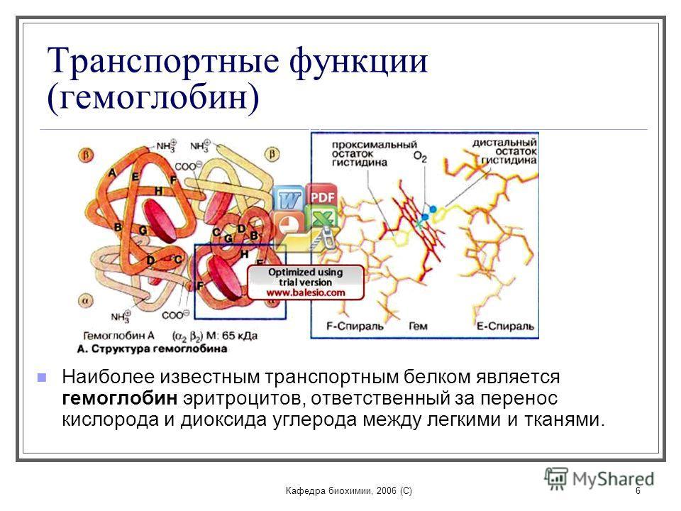 Кафедра биохимии, 2006 (C)6 Транспортные функции (гемоглобин) Наиболее известным транспортным белком является гемоглобин эритроцитов, ответственный за перенос кислорода и диоксида углерода между легкими и тканями.