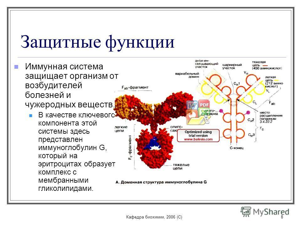 Кафедра биохимии, 2006 (C)8 Защитные функции Иммунная система защищает организм от возбудителей болезней и чужеродных веществ. В качестве ключевого компонента этой системы здесь представлен иммуноглобулин G, который на эритроцитах образует комплекс с