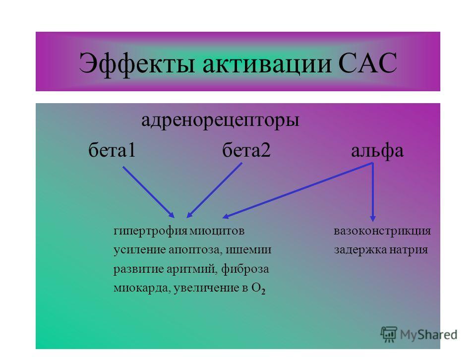 Эффекты активации САС адренорецепторы бета1 бета2 альфа гипертрофия миоцитов вазоконстрикция усиление апоптоза, ишемии задержка натрия развитие аритмий, фиброза миокарда, увеличение в О 2