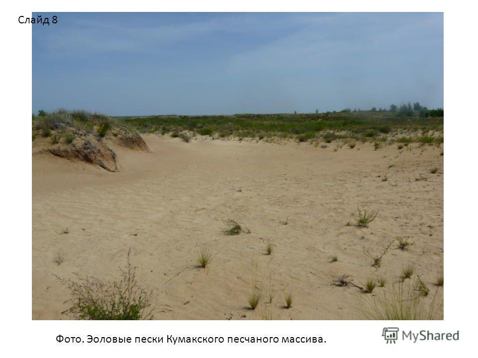 Фото. Эоловые пески Кумакского песчаного массива. Слайд 8