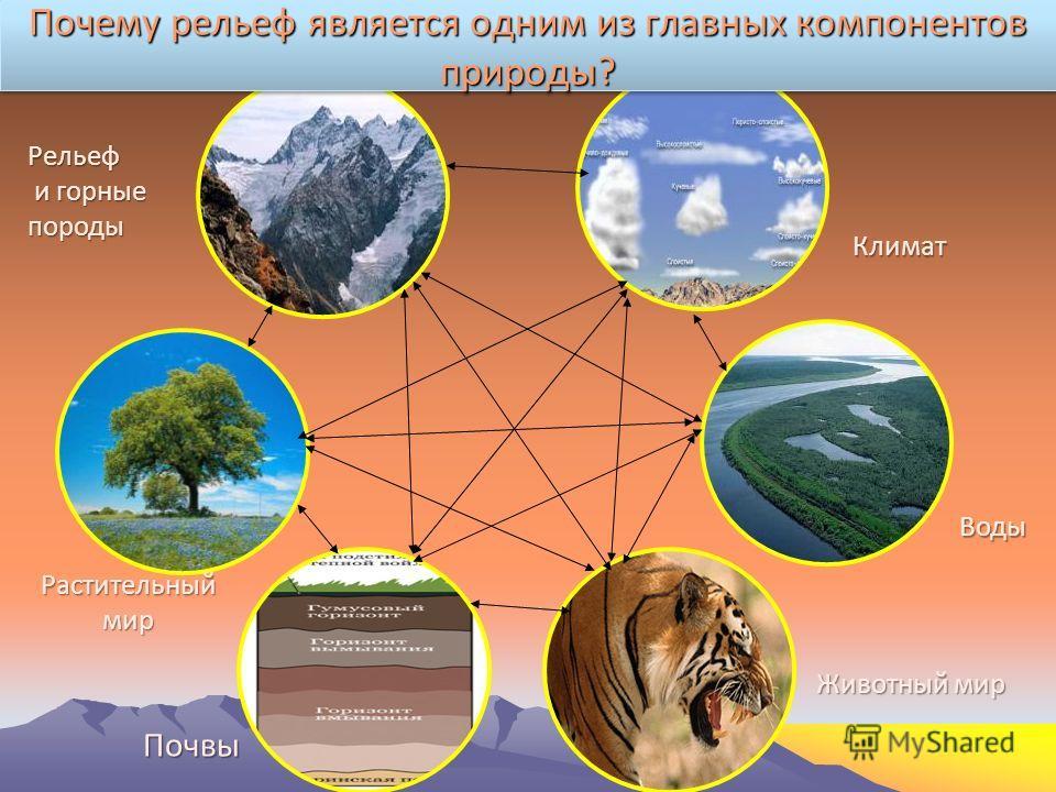 Климат Воды Животный мир Почвы Растительный мир Рельеф и горные породы Почему рельеф является одним из главных компонентов природы?