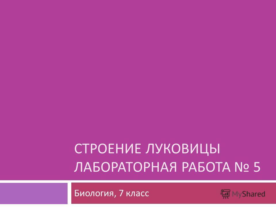 СТРОЕНИЕ ЛУКОВИЦЫ ЛАБОРАТОРНАЯ РАБОТА 5 Биология, 7 класс