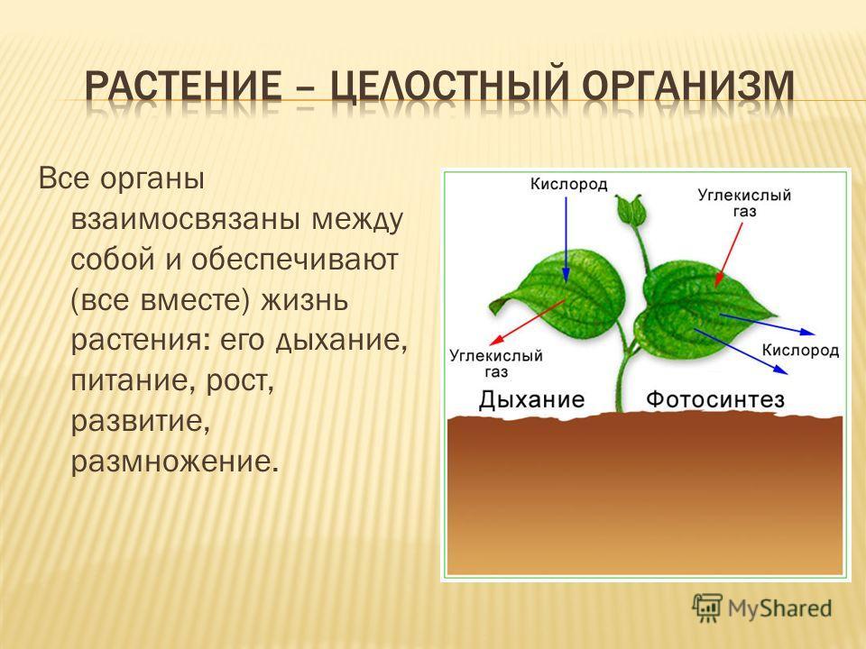 Все органы взаимосвязаны между собой