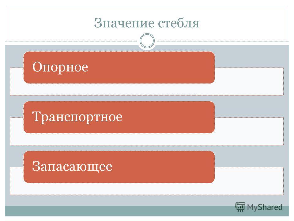 Значение стебля ОпорноеТранспортноеЗапасающее