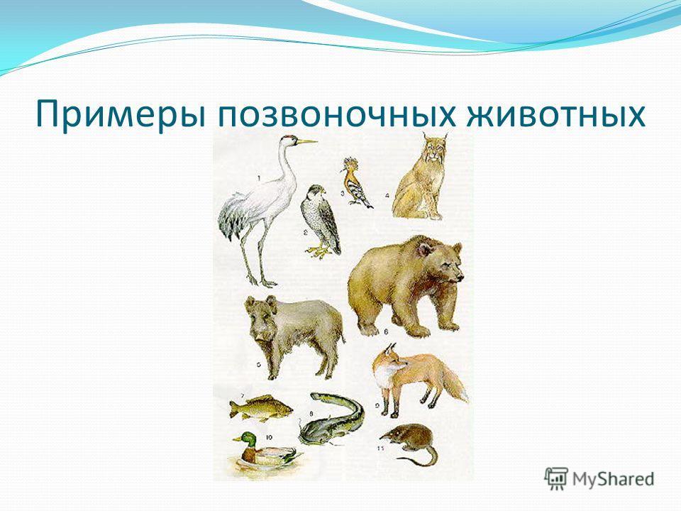 Примеры позвоночных животных