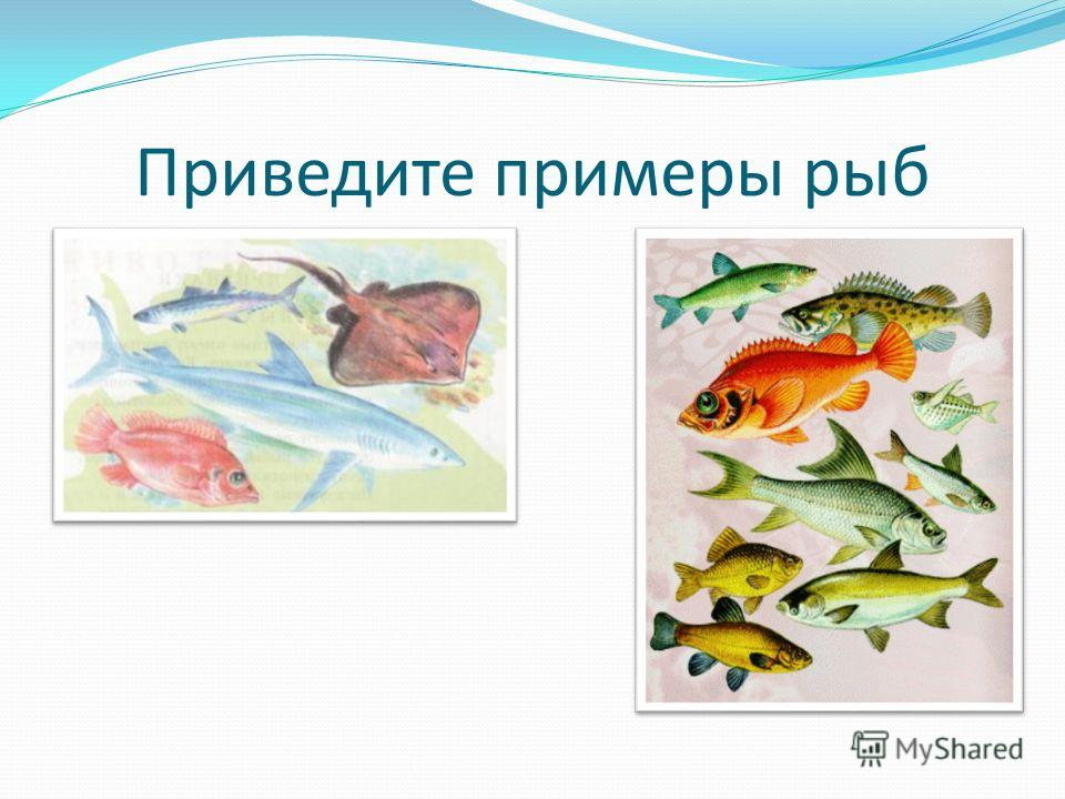 Приведите примеры рыб