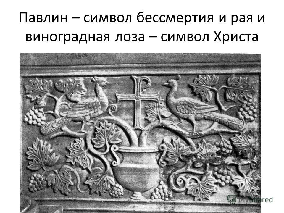 Павлин – символ бессмертия и рая и виноградная лоза – символ Христа