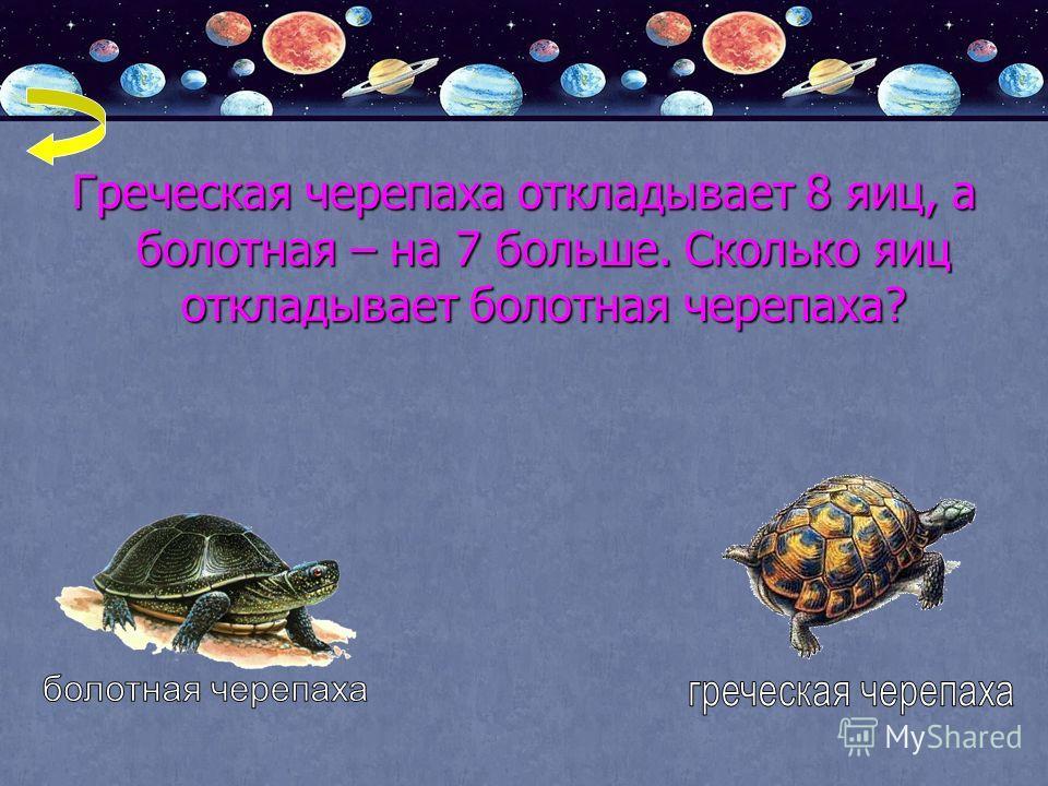 Греческая черепаха откладывает 8 яиц, а болотная – на 7 больше. Сколько яиц откладывает болотная черепаха?