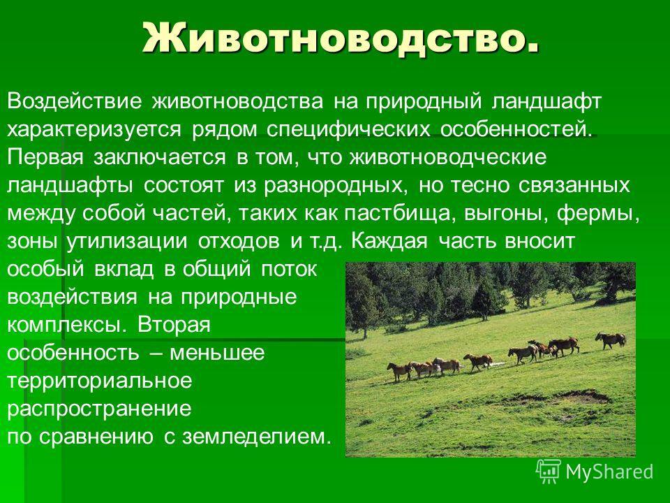 Животноводство. Воздействие животноводства на природный ландшафт характеризуется рядом специфических особенностей. Первая заключается в том, что животноводческие ландшафты состоят из разнородных, но тесно связанных между собой частей, таких как пастб