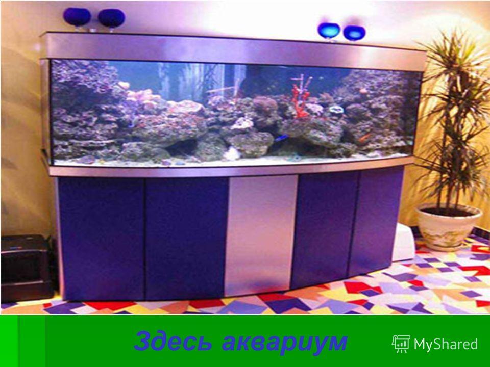 Здесь аквариум
