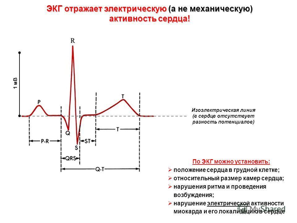 ЭКГ отражает электрическую (а не механическую) активность сердца! Изоэлектрическая линия (в сердце отсутствует разность потенциалов) 1 мВ По ЭКГ можно установить: положение сердца в грудной клетке; относительный размер камер сердца; нарушения ритма и