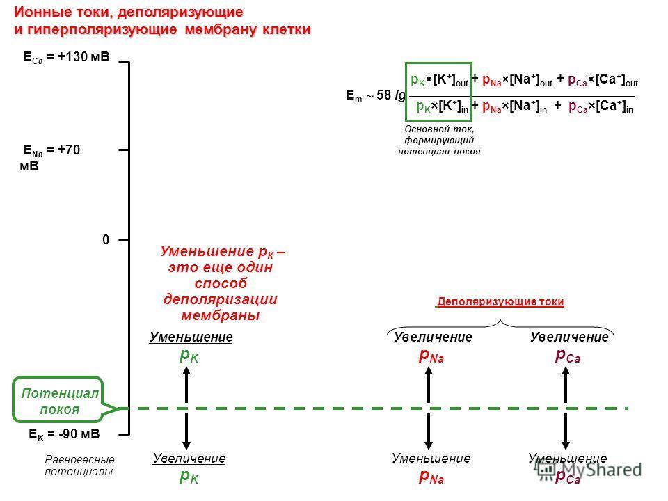 Ионные токи, деполяризующие и гиперполяризующие мембрану клетки E Na = +70 мВ E K = -90 мВ E Ca = +130 мВ p K ×[K + ] out + p Na ×[Na + ] out + p Ca ×[Ca + ] out p K ×[K + ] in + p Na ×[Na + ] in + p Ca ×[Ca + ] in E m 58 lg 0 Потенциал покоя Равнове