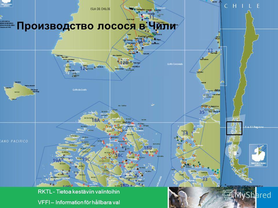 RKTL - Tietoa kestäviin valintoihin VFFI – Information för hållbara val Производство лосося в Чили