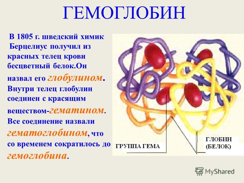 ГЕМОГЛОБИН В 1805 г. шведский химик Берцелиус получил из красных телец крови бесцветный белок.Он назвал его глобулином. Внутри телец глобулин соединен с красящим веществом- гематином. Все соединение назвали гематоглобином, что со временем сократилось