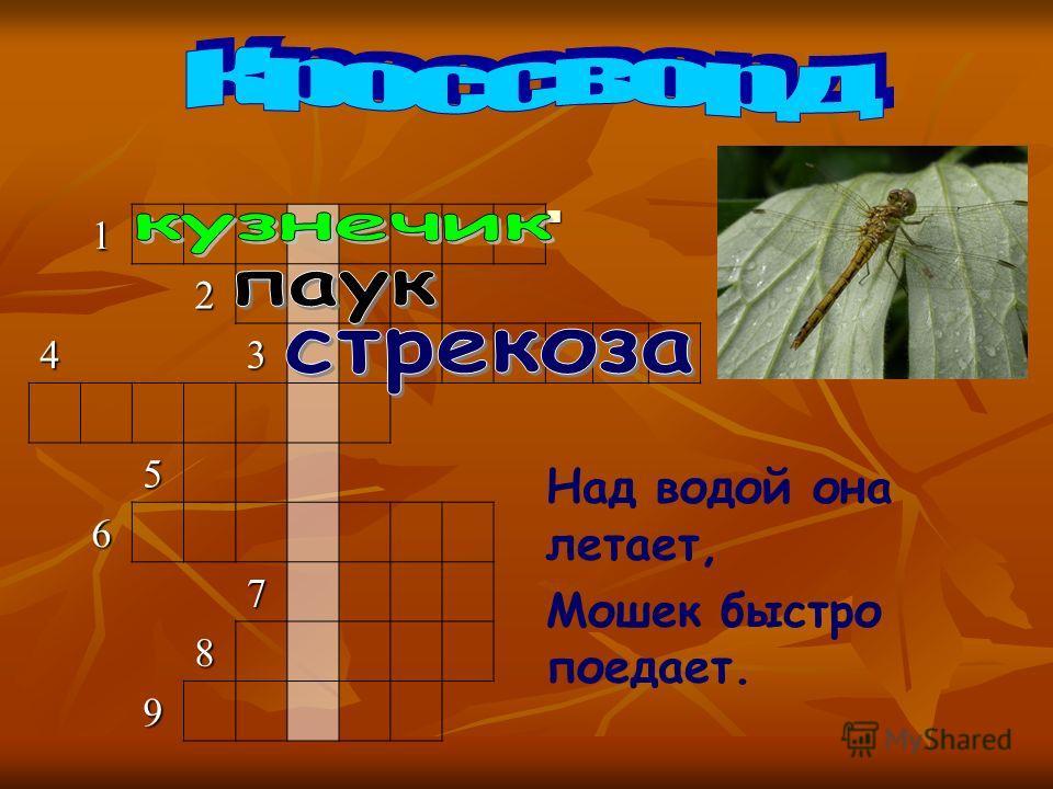 Вопрос 3 Вопрос 31 2 43 5 6 7 8 9 Над водой она летает, Мошек быстро поедает.