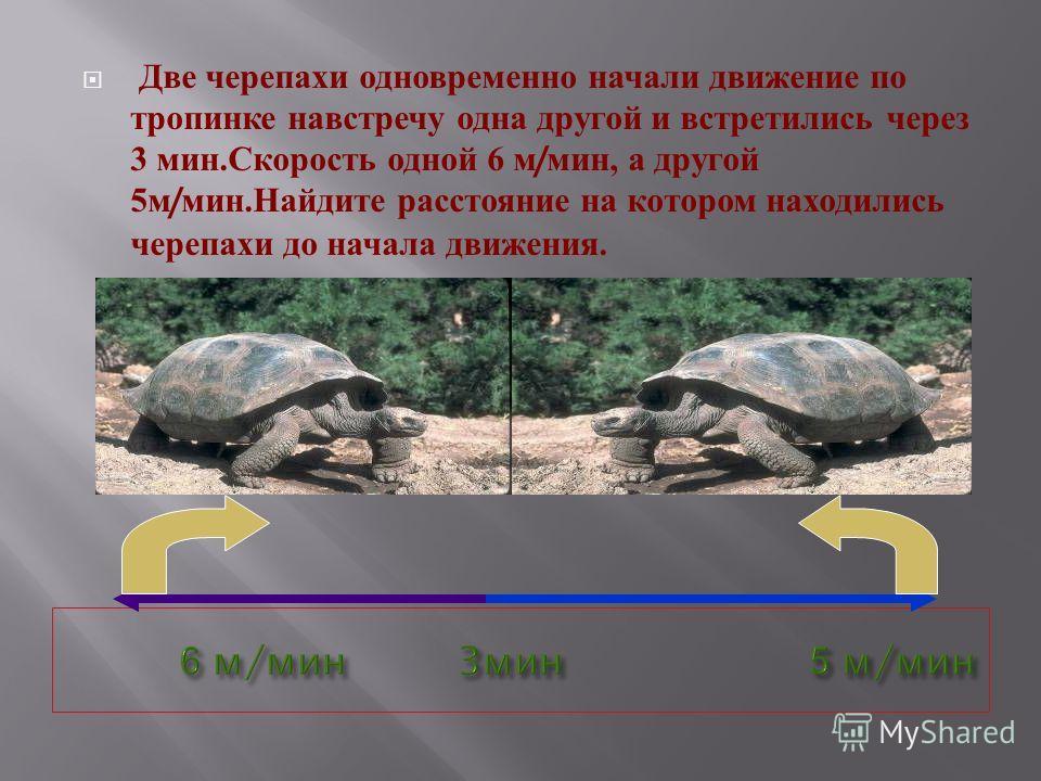 Две черепахи одновременно начали движение по тропинке навстречу одна другой и встретились через 3 мин. Скорость одной 6 м / мин, а другой 5 м / мин. Найдите расстояние на котором находились черепахи до начала движения.