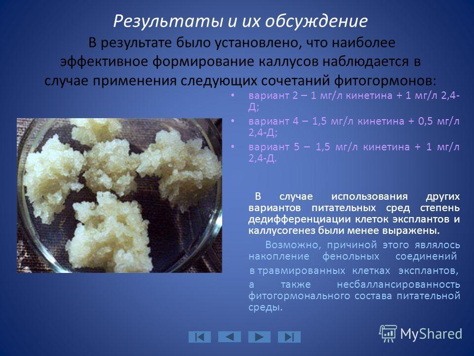 Результаты и их обсуждение В результате было установлено, что наиболее эффективное формирование каллусов наблюдается в случае применения следующих сочетаний фитогормонов: вариант 2 – 1 мг/л кинетина + 1 мг/л 2,4- Д; вариант 4 – 1,5 мг/л кинетина + 0,
