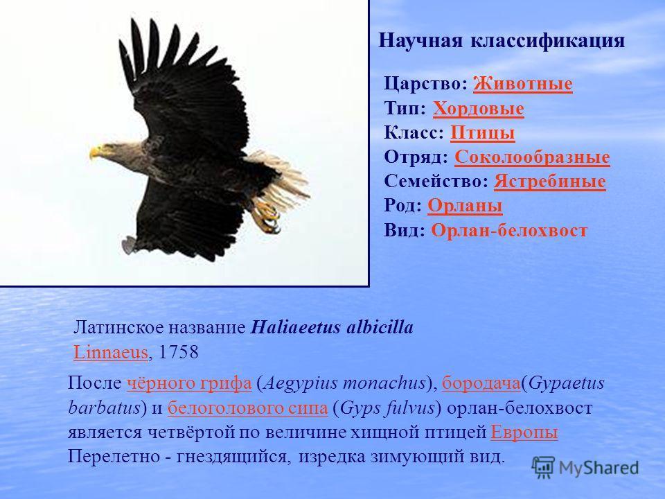 Царство: ЖивотныеЖивотные Тип: Хордовые Хордовые Класс: ПтицыПтицы Отряд: СоколообразныеСоколообразные Семейство: ЯстребиныеЯстребиные Род: ОрланыОрланы Вид: Орлан-белохвост Научная классификация Латинское название Haliaeetus albicilla Linnaeus, 1758