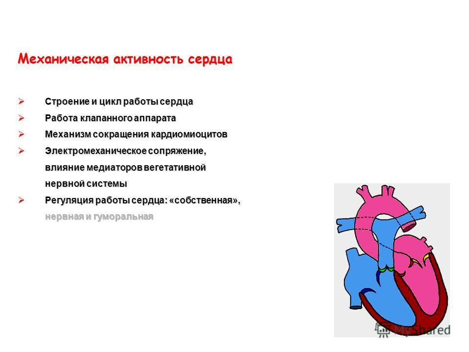 Механическая активность сердца Строение и цикл работы сердца Строение и цикл работы сердца Работа клапанного аппарата Работа клапанного аппарата Механизм сокращения кардиомиоцитов Механизм сокращения кардиомиоцитов Электромеханическое сопряжение, вли