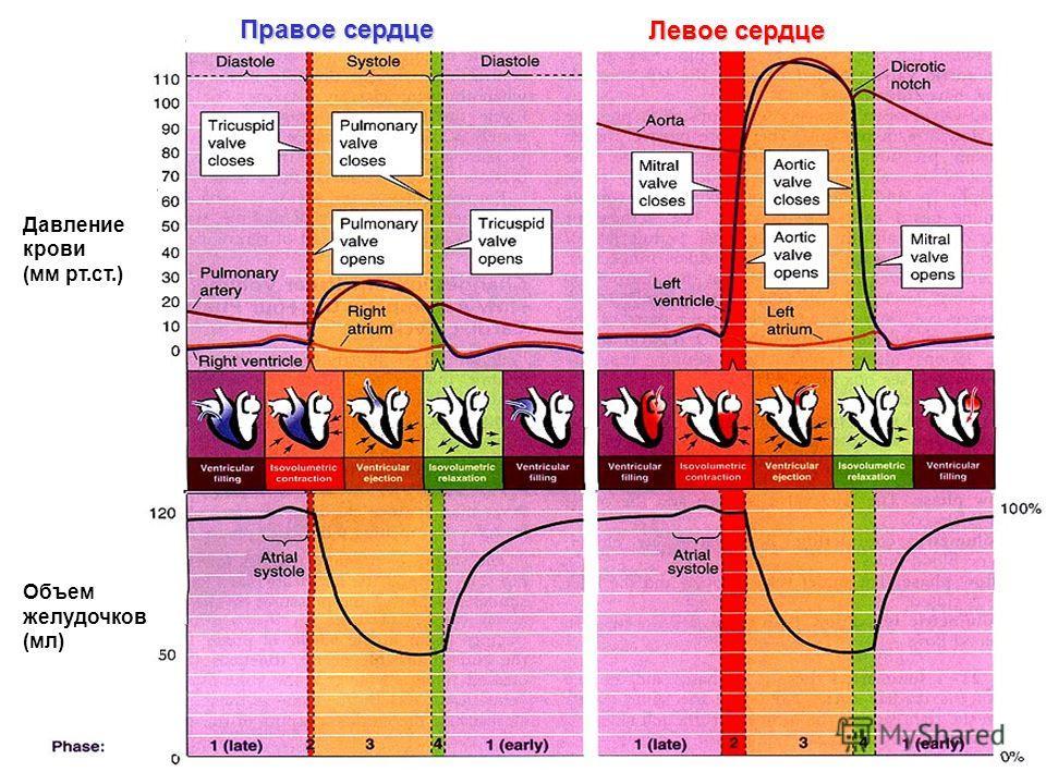 Левое сердце Правое сердце Давление крови (мм рт.ст.) Объем желудочков (мл)