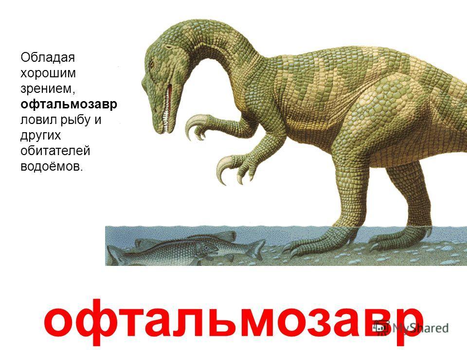 орнитомим Орнитомим (Подражатель птицам) Огромным хищникам вес в несколько тонн мешал догонять добычу. Но на Земле существовали и очень худенькие быстроногие динозавры, которые также являлись хищниками. Один из них орнитомим. Это был стройный всеядны