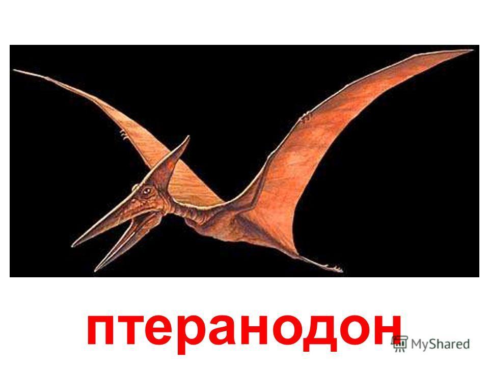 паразауролоф Паразауролоф