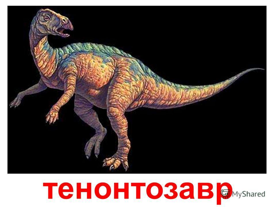 Стегозавра никогда не спутаешь с каким-нибудь другим ящером - на его спине располагались ромбовидные костные пластины, которые он использовал для защиты от хищников, а главное, в качестве регулятора температуры тела. Кожа на пластинах была пронизана