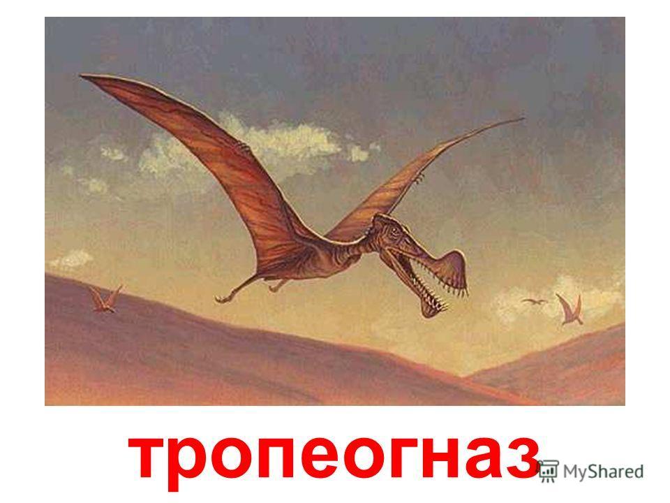 Растительноядный трицератопс обладал двумя мощными рогами над глазами, при помощи которых защищал свою территорию. Рогатые динозавры трицератопсы группировались обычно в стада, где были и вожаки- самцы, и самки, и детеныши. При появлении хищного дино
