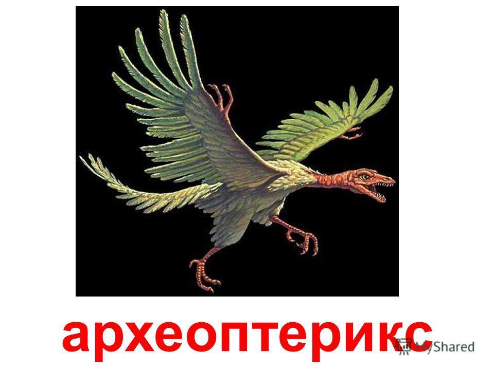аргентинозавр Аргентинозавр