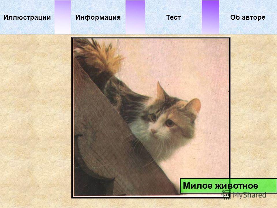 Милое животное ИллюстрацииТестОб автореИнформация